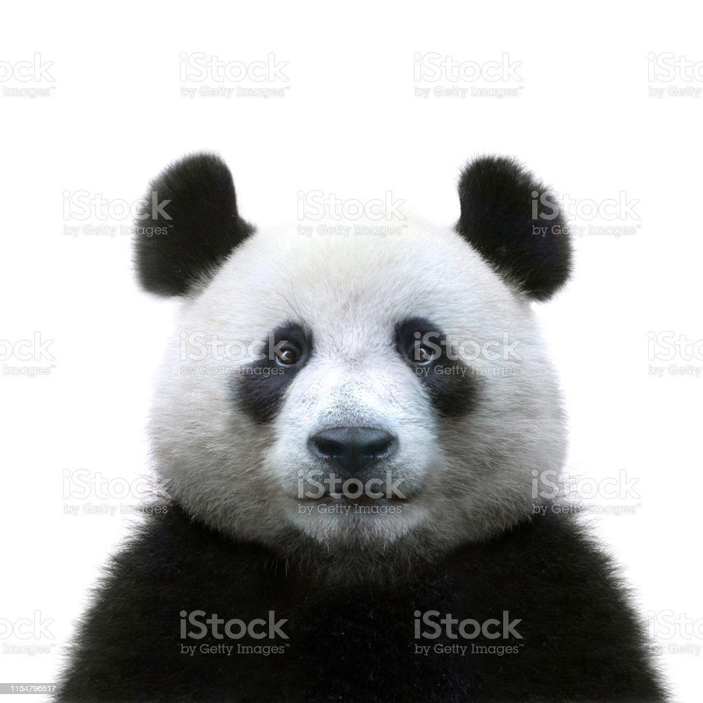 Beyaz arka planda izole Panda yüz - Royalty-free Ayı Stok görsel