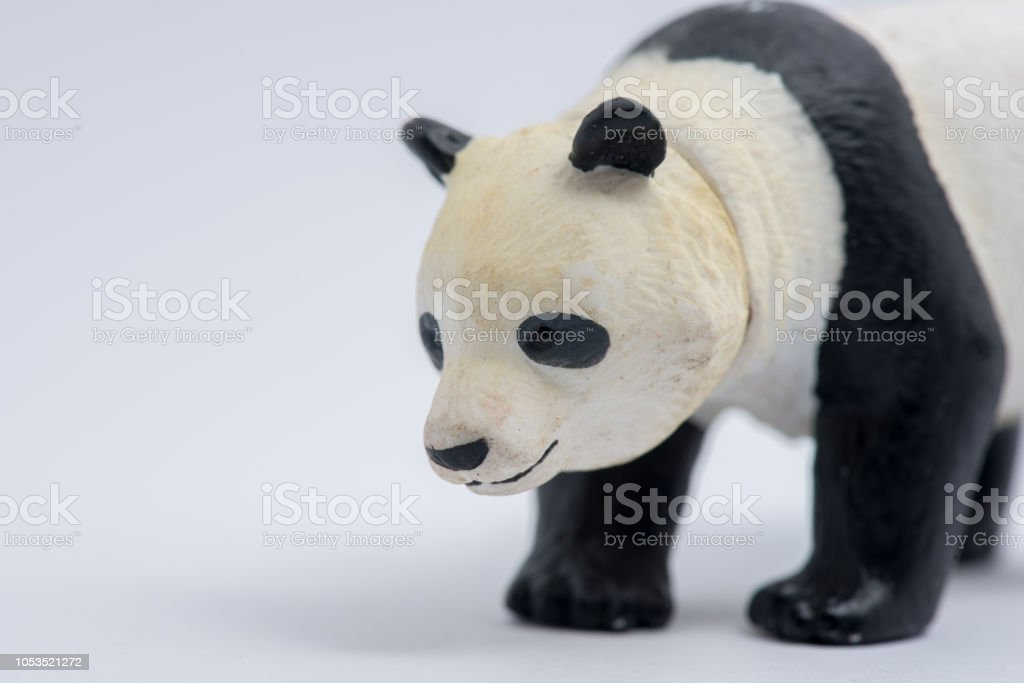 Panda model isolated on white background stock photo