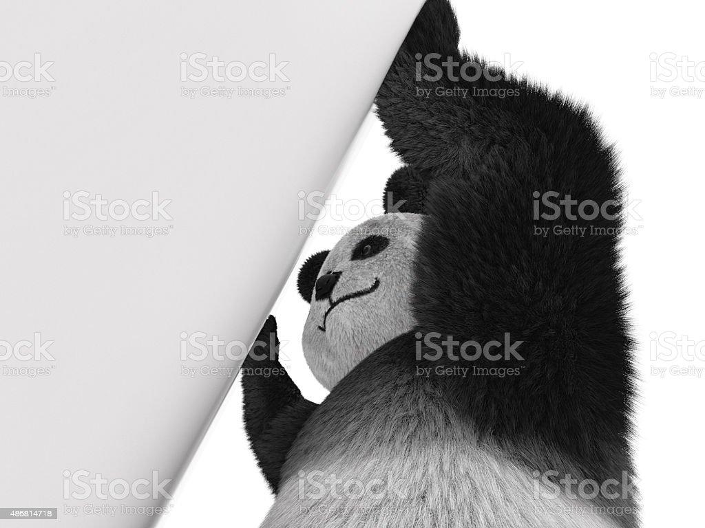 panda wall stock photo