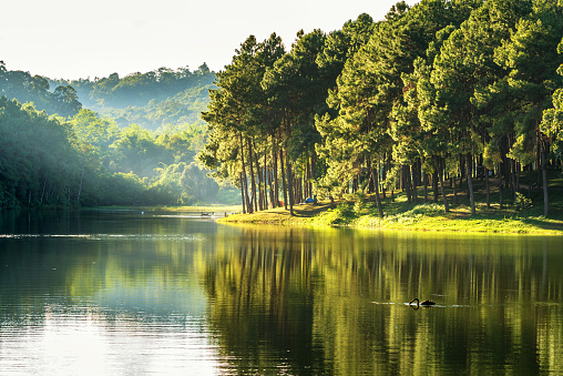 istock pang ung , reflection of pine tree in a lake 503414558