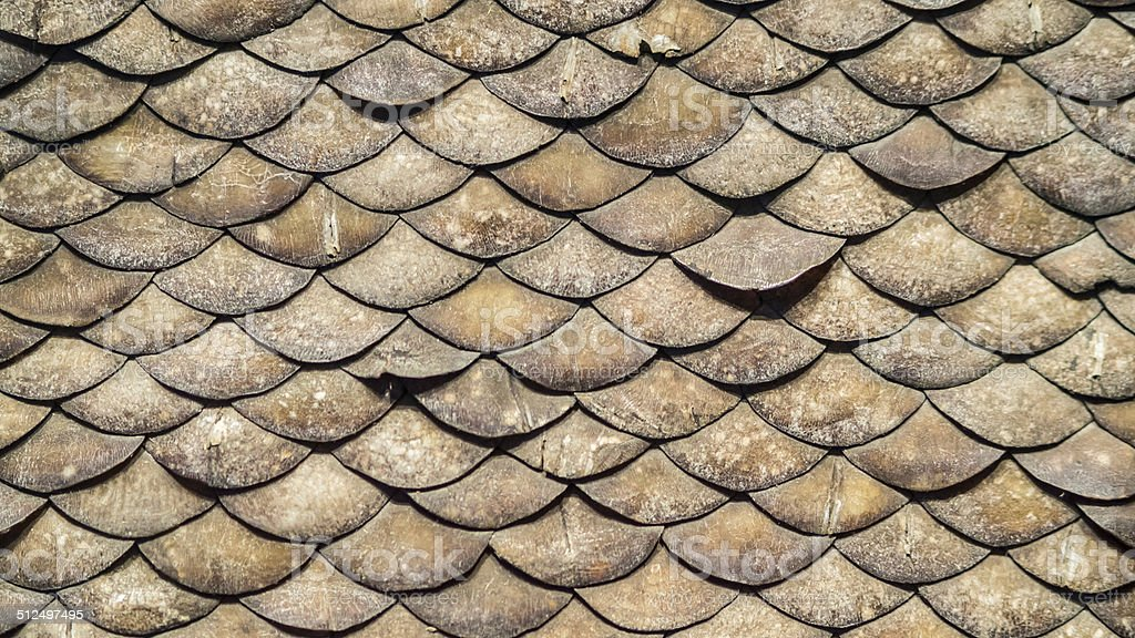 Pangolin scales, Similar to the armadillo, stock photo