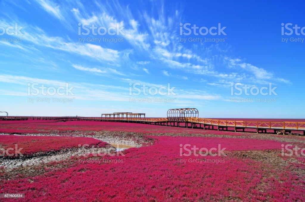 Panjin red beach stock photo