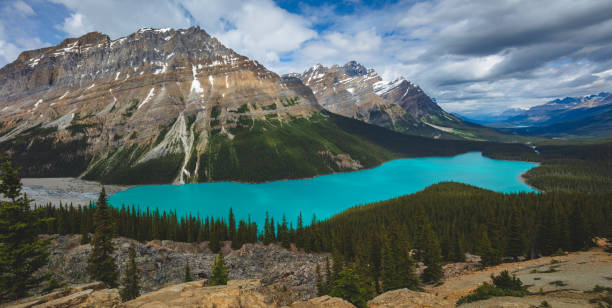 Pano of the beautiful blue Peyto Lake in Banff National Park in Canada stock photo