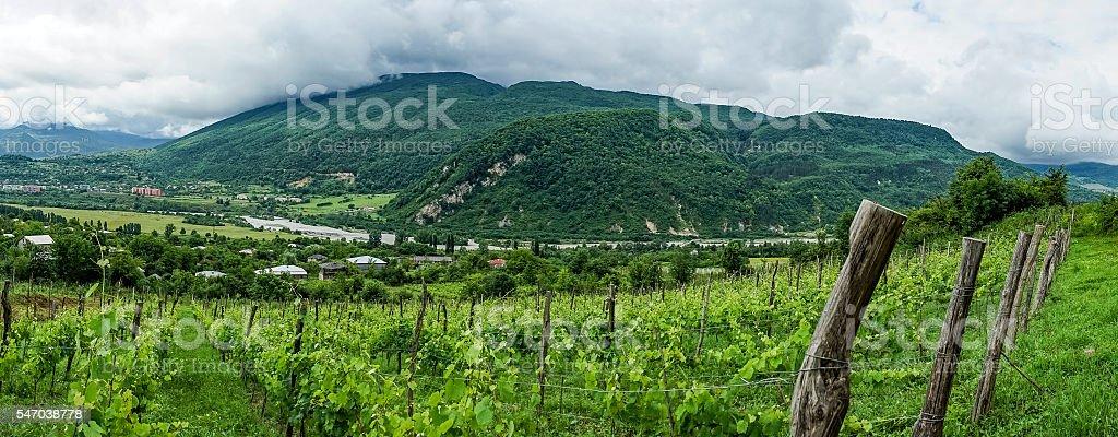 Panoram of Georgian vineyard stock photo