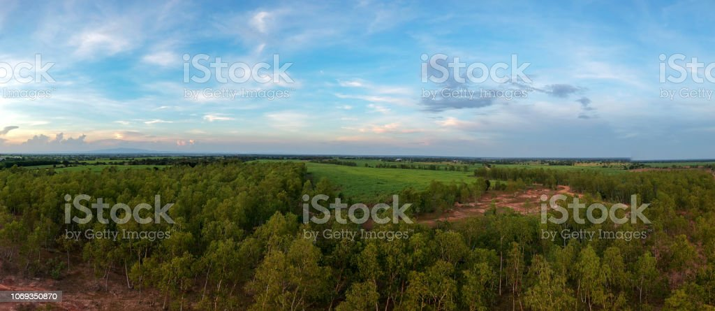 Panorama Aerial View From Drone Reforestation Of Eucalyptus