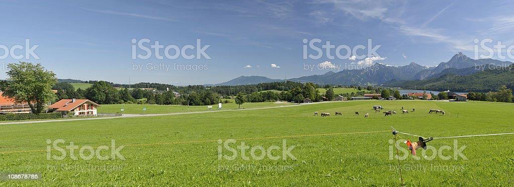 Panorama Algaeu with cows royalty-free stock photo