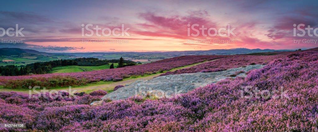 Panorama at Twilight over Rothbury Heather stock photo