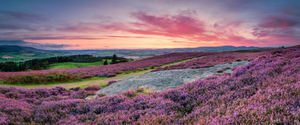 Panorama at Twilight over Rothbury Heather Rothbury Terraces walk offers views over the Coquet Valley to the Simonside and Cheviot Hills, heather covers the hillside in summer northeastern england stock pictures, royalty-free photos & images