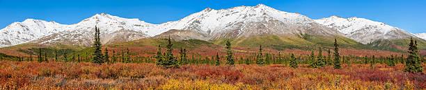 Panorama Autumn in Denali National Park, Alaska – Foto