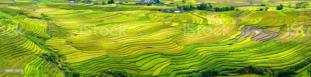 Panorama Schönheit Terrassenfeldern Tu Le, Yen Bai, Vietnam – Foto