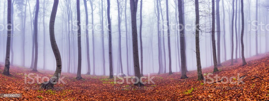Panorama beech forest royalty free stockfoto
