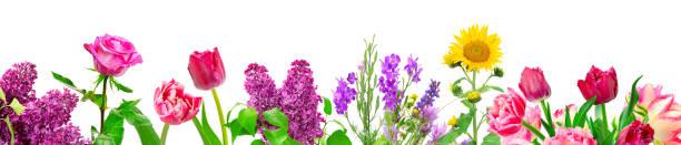 Panorama different flowers picture id1164209586?b=1&k=6&m=1164209586&s=612x612&w=0&h=uiomnkos 2f zckjirnzempva2thcghojrh  4es978=
