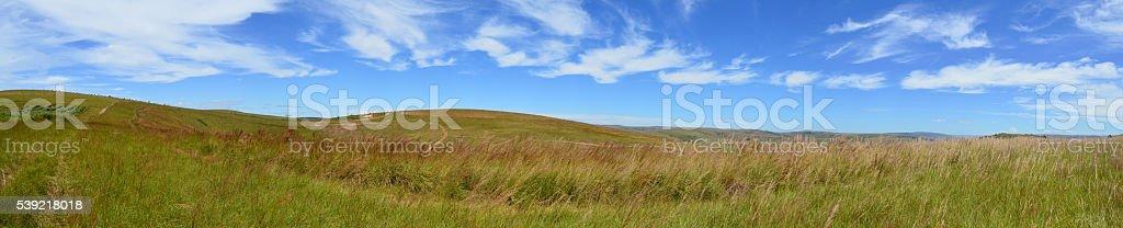 Panorama d'une prairie sous un ciel bleu avec des cirrus stock photo