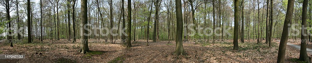Panorama Forest royalty-free stock photo