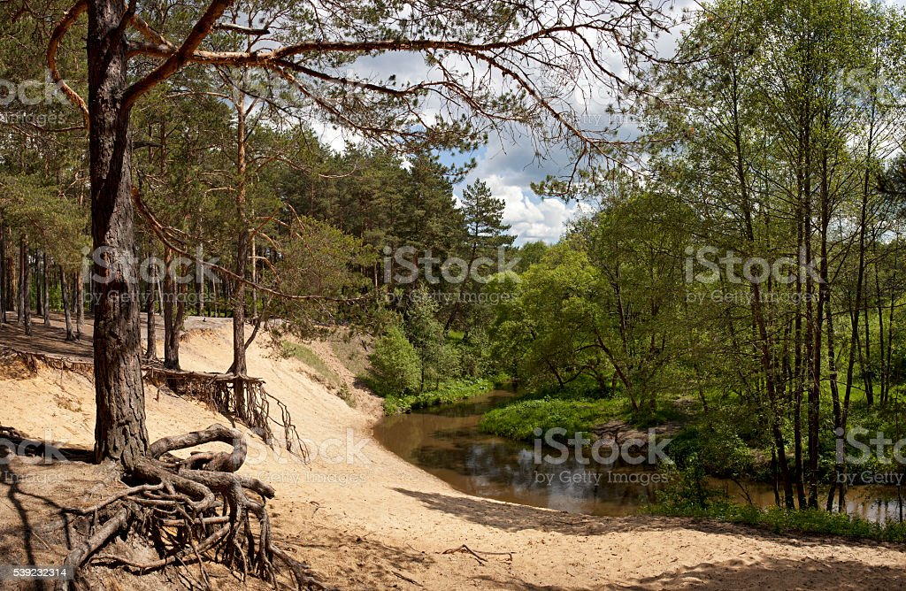 Panorama forest river. royalty-free stock photo