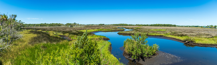 Panorama taken from the top of Lastinger Tower at the end of the Chassahowitzka Salt Marsh Trail