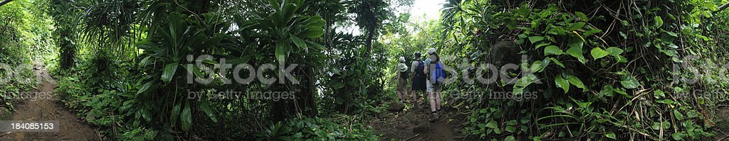 Panorama: Hikers on Jungle Trail stock photo