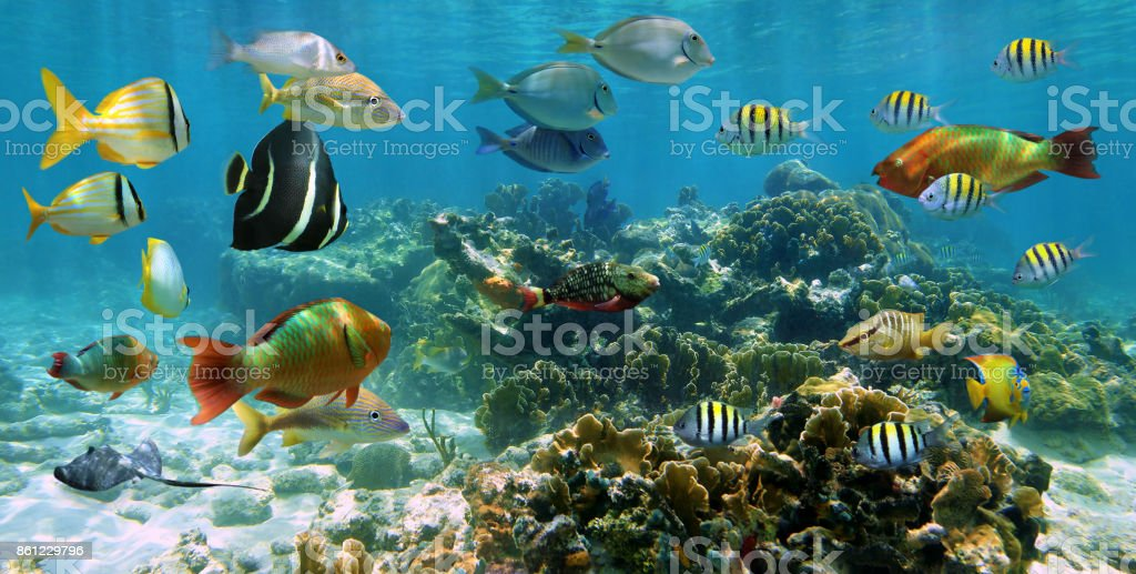 Panorama in a coral reef with shoal of fish stock photo