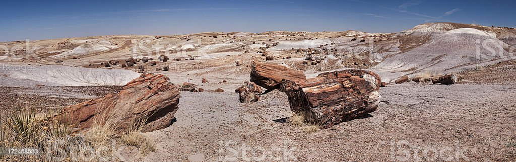 Panorama in Petrified Forest National Park stock photo