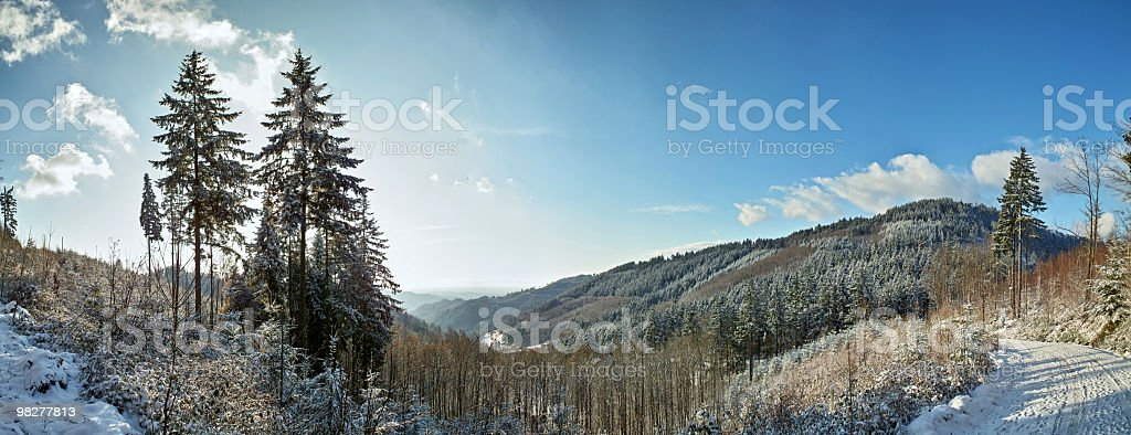 panorama in winter with fir forest and trail royalty-free stock photo