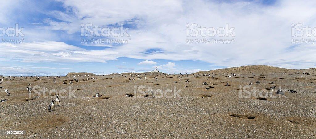Panorama Magdalena Island, Strait of Magellan, Patagonia, Chile royalty-free stock photo