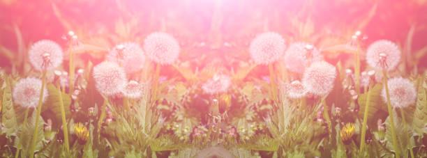 Panorama magic meadow with green grass and beautiful bokeh picture id1248777076?b=1&k=6&m=1248777076&s=612x612&w=0&h=pe3ovef y a 2muvm12m54drm9bazzribfrrcg5vpu8=