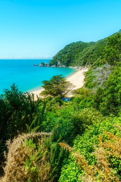 파노라마 해변, 아벨 태 즈만 국립 공원, 뉴질랜드 5 - 태즈먼 해 뉴스 사진 이미지