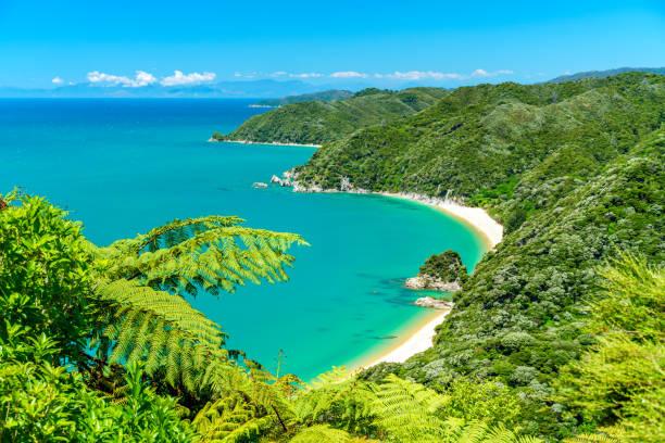파노라마 해변, 아벨 태 즈만 국립 공원, 뉴질랜드 9 - 태즈먼 해 뉴스 사진 이미지