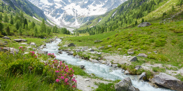 Panorama of a beautiful mountain landscape with mountain river and glacier in the background Mountain landscape with a torrent and a glacier trentino alto adige stock pictures, royalty-free photos & images