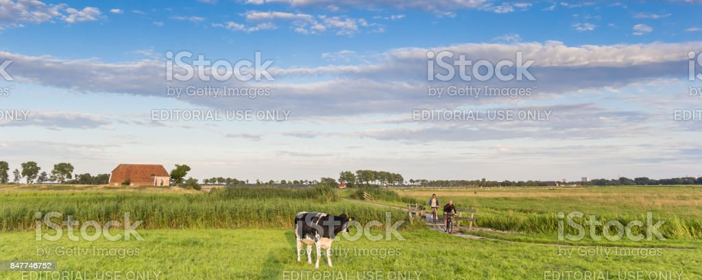 Panorama of a cow and people on a bicycle path in Groningen, Holland stock photo
