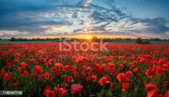 istock panorama of a field of red poppies against the background of the evening sky 1163467748