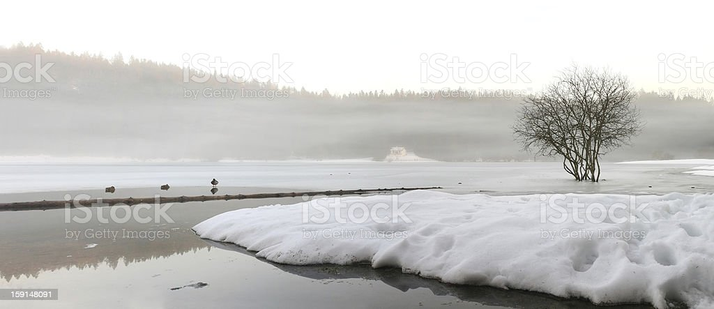 Panorama of a frozen lake in the fog royalty-free stock photo