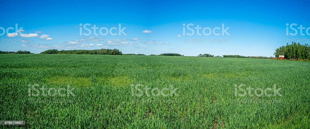 Panorama of a grain field in Saskatchewan stock photo