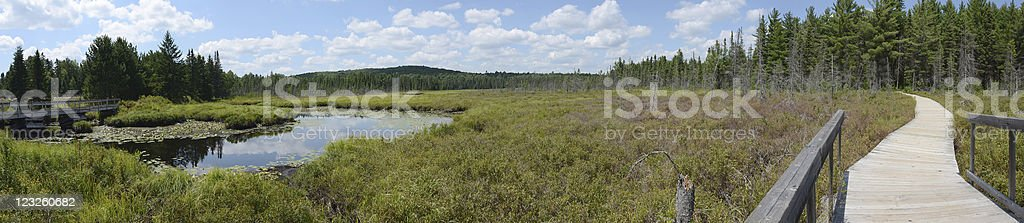 Panorama of a Scenic Bog royalty-free stock photo