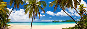panorama of coconut palm trees at a tropical beach in Virgin Islands, the Caribbean