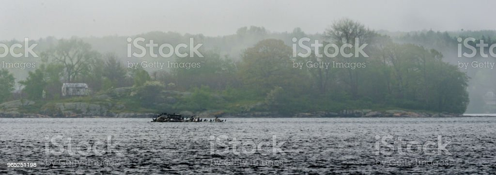 Panorama of a vacation  island shrouded in fog with Cormorants in the foreground. zbiór zdjęć royalty-free