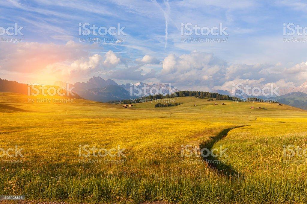 Panorama of Alpine meadow stock photo