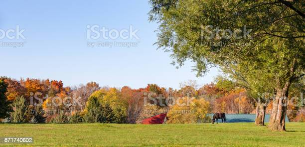 Panorama of an idyllic pasture with grazing horse and copy space picture id871740602?b=1&k=6&m=871740602&s=612x612&h=aevtsztmptk6byjh9vgnpswbpbx rvmnvkt7ognuh9k=