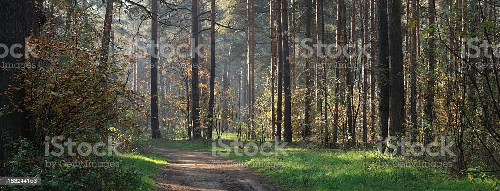 Panorama of autumn royalty-free stock photo