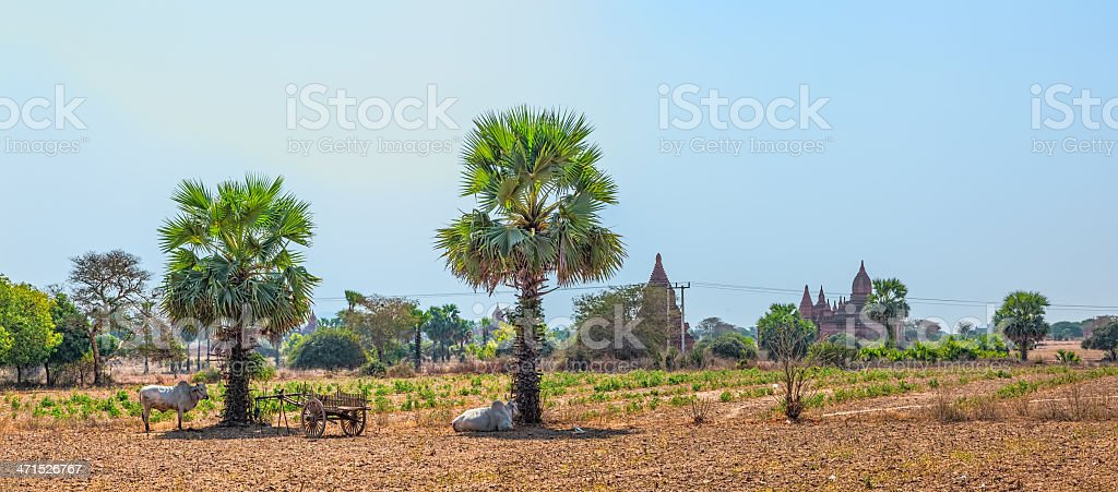 Panorama of Bagan area royalty-free stock photo