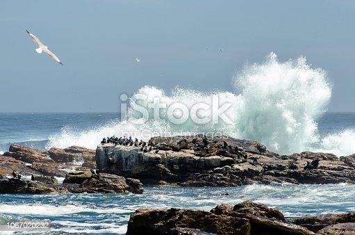 Panorama di Cape Point con uccelli su scoglio e onde