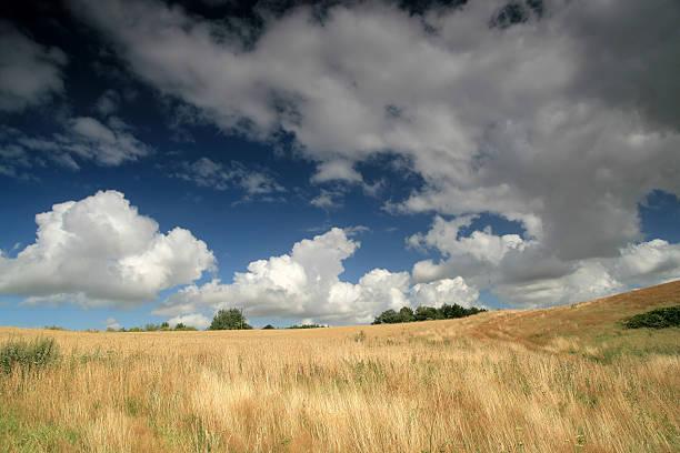 Panorama von field – Foto