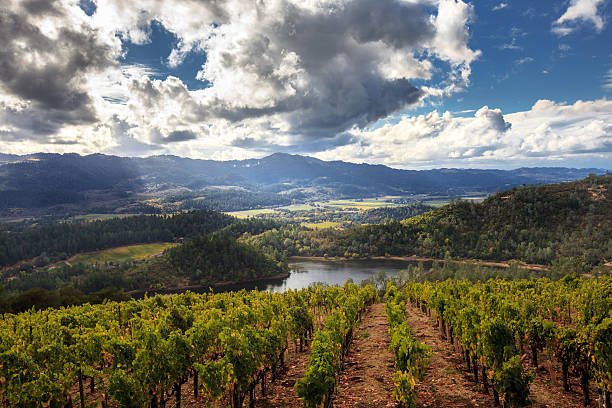 Panorama of Howell Mountain, Napa Valley wine country in autumn Sun and clouds at a Napa California vineyard with mountains, valleys and lake sonoma stock pictures, royalty-free photos & images