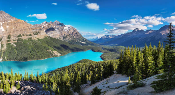 Panorama of Peyto Lake in Banff National Park Panoramic view of turquoise Lake Peyto with surrounding snow-covered mountains and forest in the valley during sunny summer day, Banff National Park, Canadian Rockies, Canada. rocky mountains north america stock pictures, royalty-free photos & images