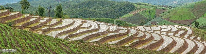 607590542istockphoto Panorama of rice fields on terraced 485377354