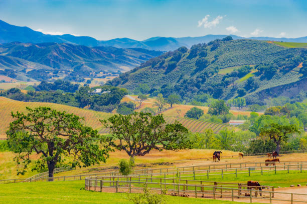 Panorama of Santa Ynez Mountains valley, Santa Barbara California (P) Santa Barbara vineyard, wine country, looking over, mountains, Santa Ynez valley, Santa Ynez vineyard, rolling hills, horse ranch, Santa Ynez mountains santa barbara california stock pictures, royalty-free photos & images