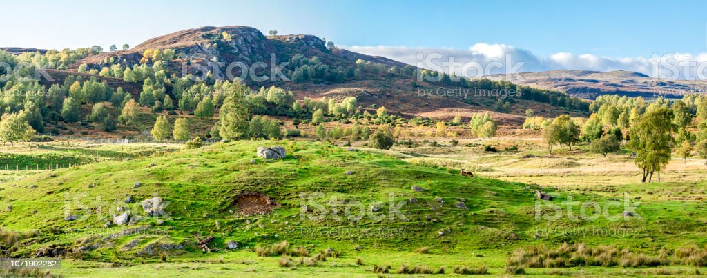 Panorama of Scottish Highlands outdoors and red deers lying down on the hills slopes stock photo