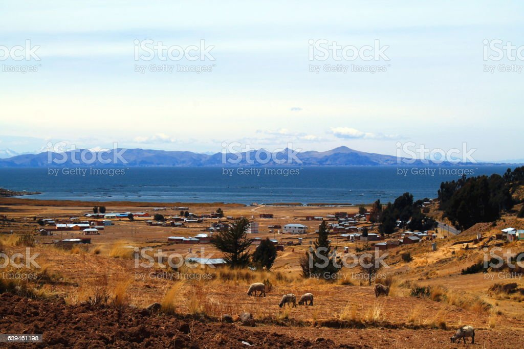 panorama of sheeps, lake titicaca and village stock photo