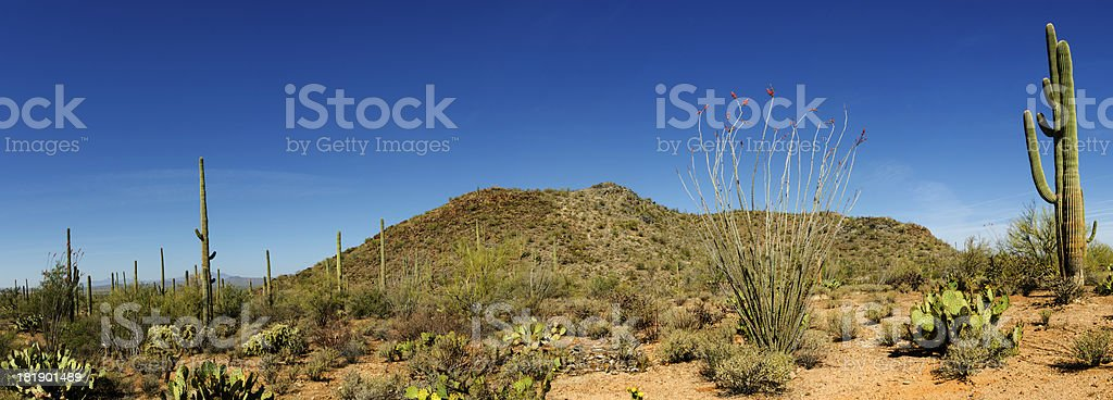 Panorama of Sonoran Desert Landscape stock photo