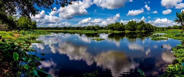 panorama sommer see brazos bend park, texas. - wasserlilien stock-fotos und bilder